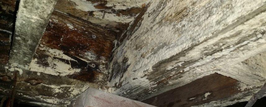 Dry Otter Waterproofing | Crawl Space Wood Repair | Rotted Wood